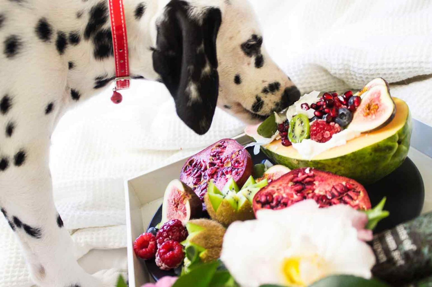 6 Human Foods Dogs Can Eat
