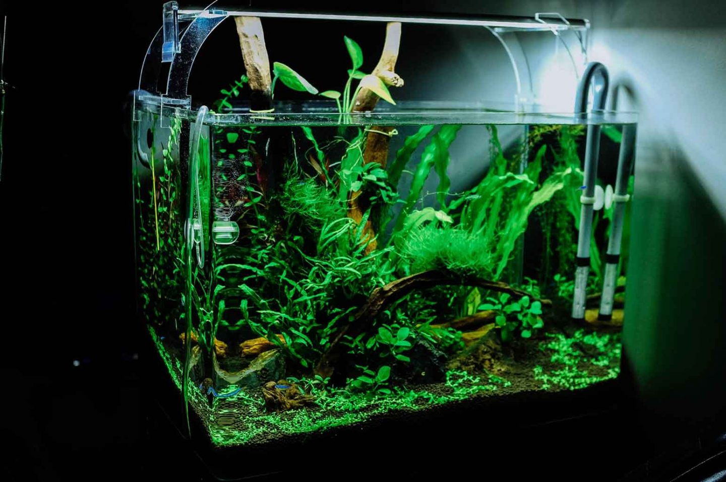 Aquarium Essentials Every Fish Keeper Should Own