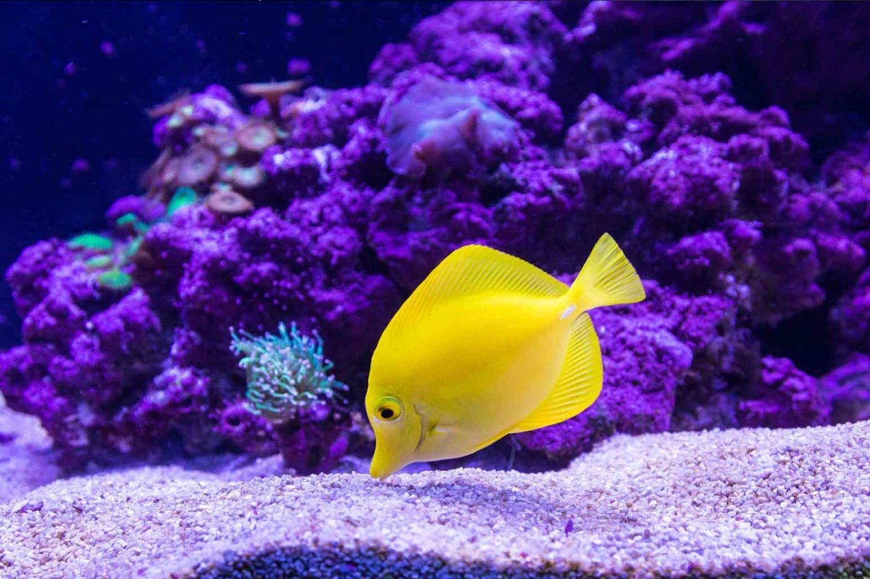 Aquarium Essentials Every Fish Keeper Should Own