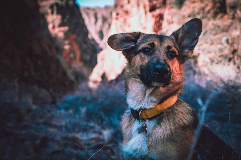 Bringing Your Dog Along Traveling