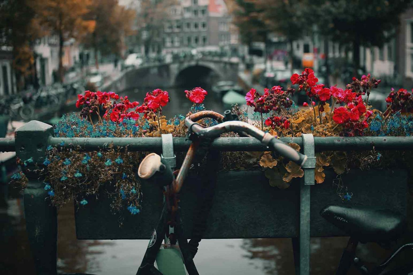 the Breathtaking Beauty of Amsterdam