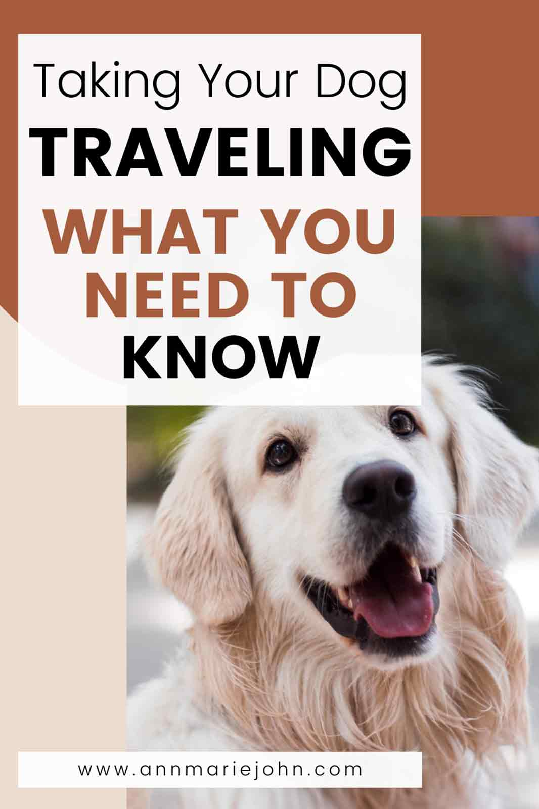 Taking Your Dog Traveling, What You Need to Know
