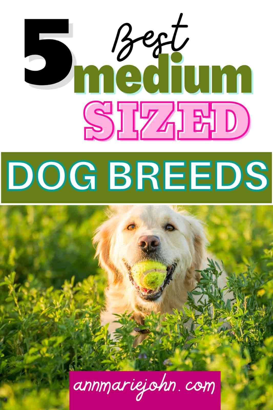 The Best Medium-Sized Dog Breeds