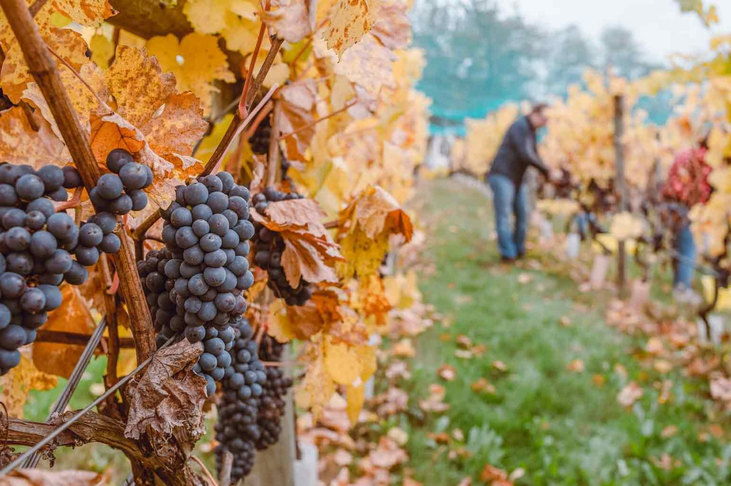 Best Wineries to Visit in North America