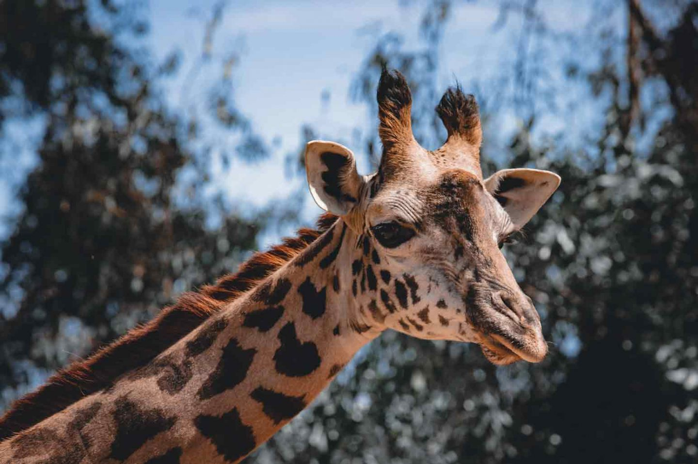 Biggest and Most Impressive Zoos in California