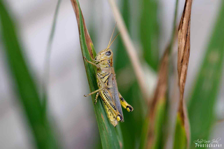 best staple feeder for reptiles