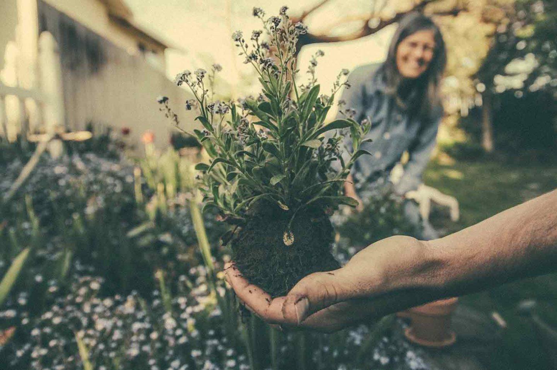 Avoiding Being Your Garden's Worst Enemy