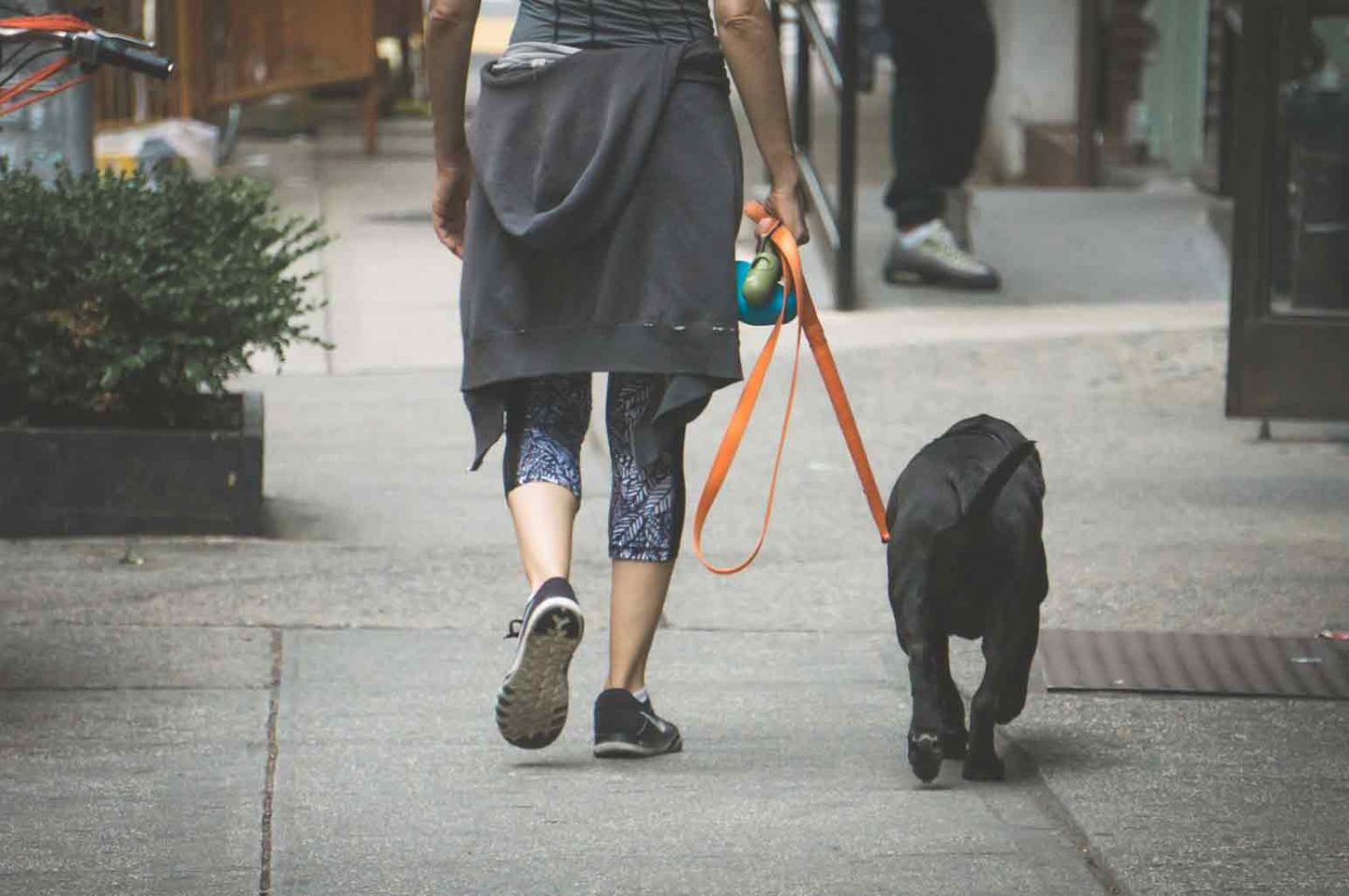 Things You Need to Walk Your Dog