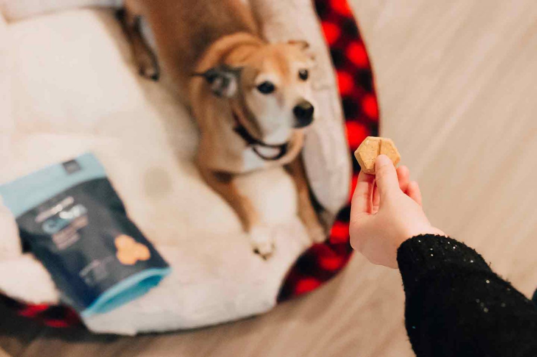 How To Teach Dog Tricks