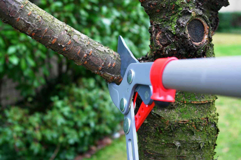Properly Maintaining Trees