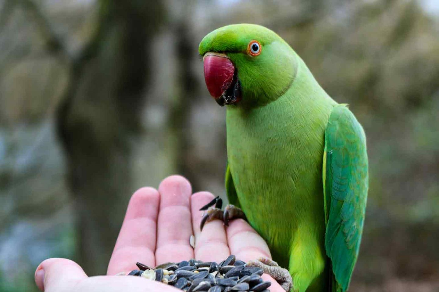 What You Should Feed Your Birds
