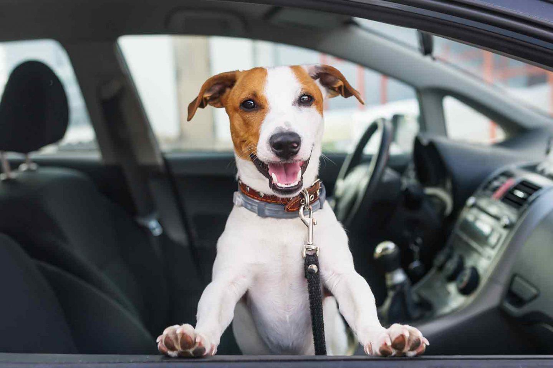 Choosing the best dog car seat