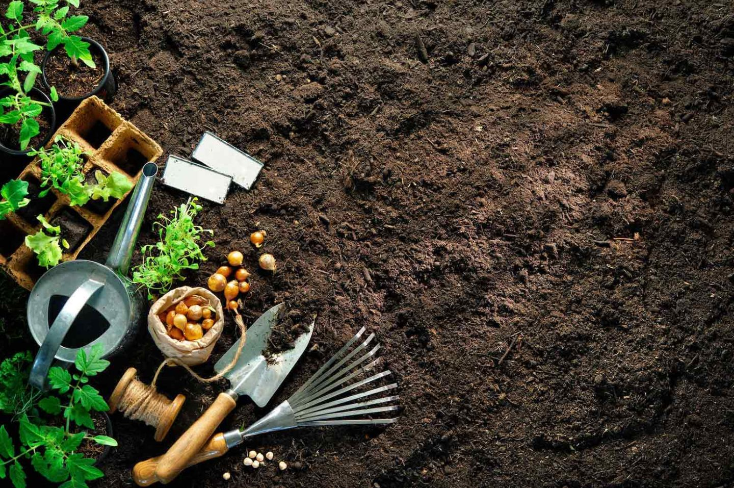 Importance Of Good Soil In Growing Vegetables