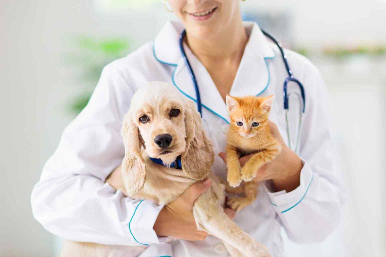 Selling Veterinary Practice