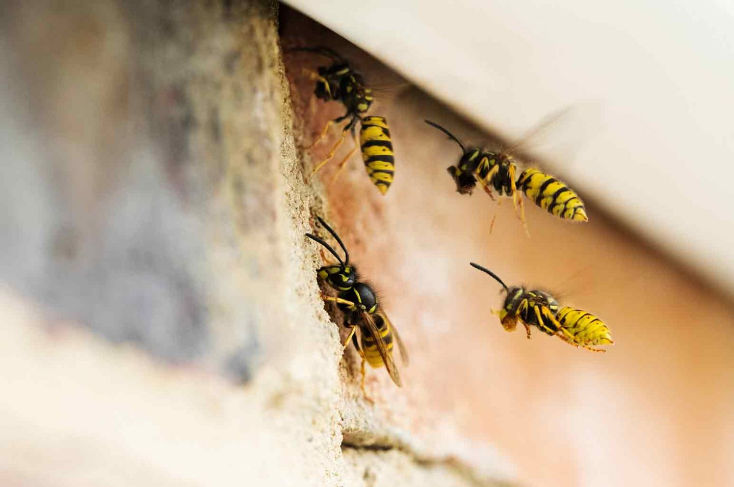 what to do with a wasp infestation