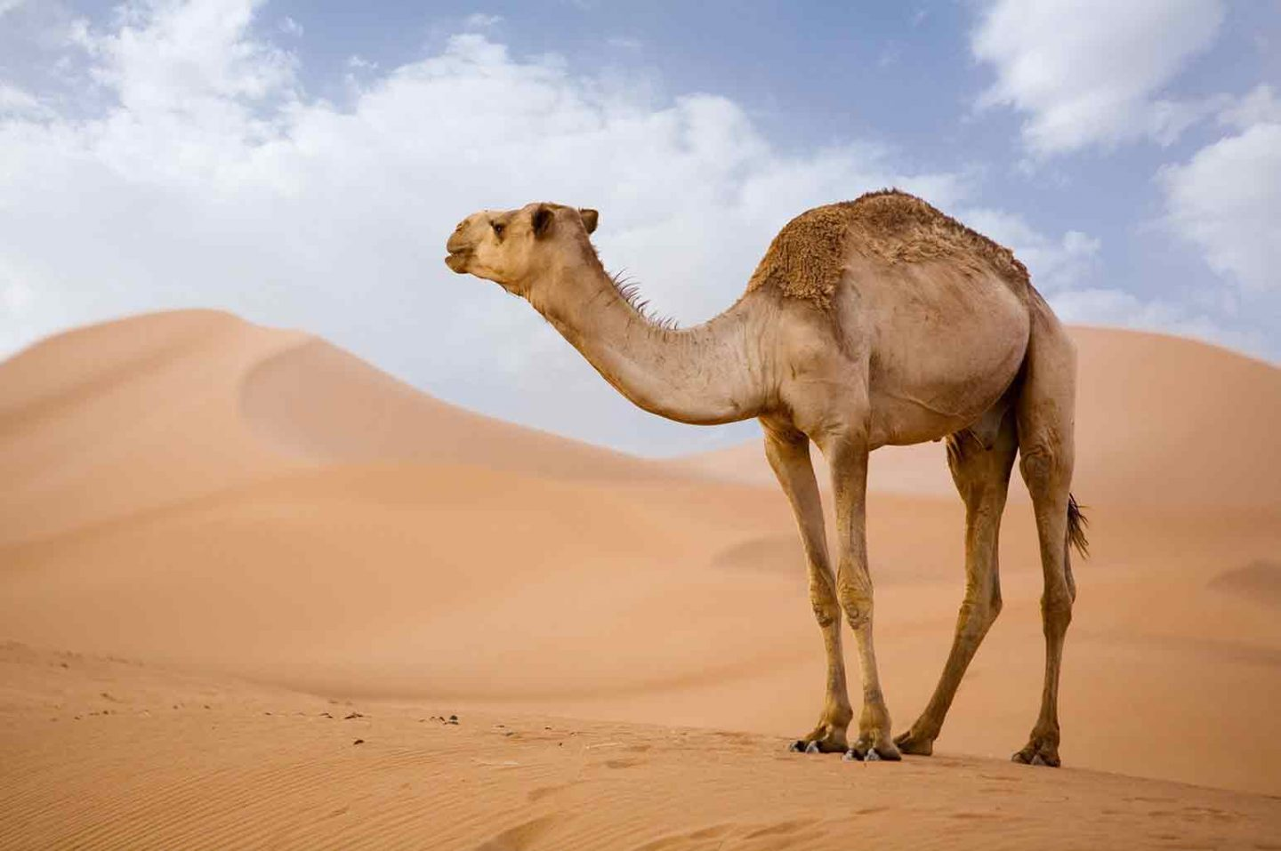 Best Animal Attractions in the UAE