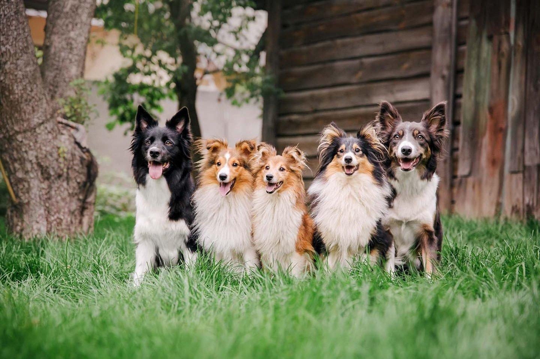 Benefits of Pet Insurance