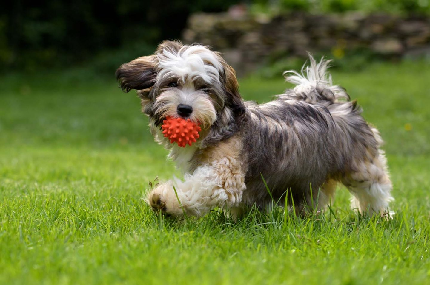 How To Make Sure Your Pet Is Getting Enough Exercise