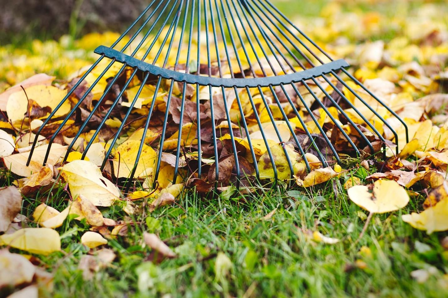 How To Keep Your Garden Clean This Fall