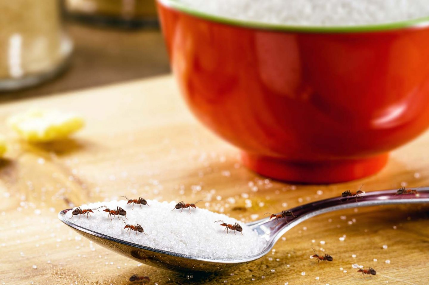 Tips To Avoid Ants In Your Kitchen