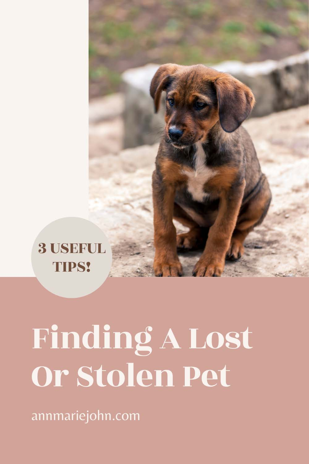 finding a lost or stolen pet